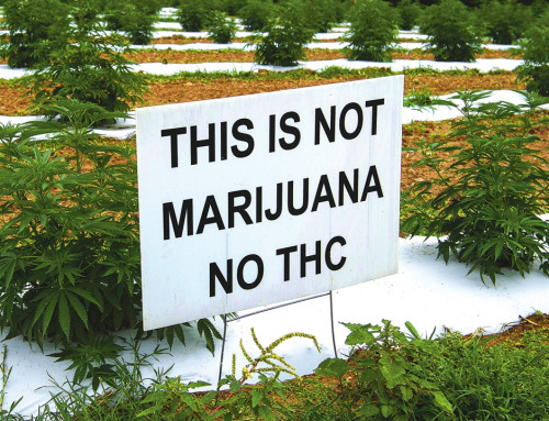Hemp Cultivation: How Can Potency Testing Help?