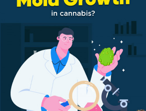 How to predict Mold Growth in cannabis?