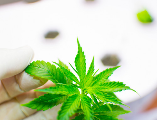 Canopy Growth And The Need For In-House Testing