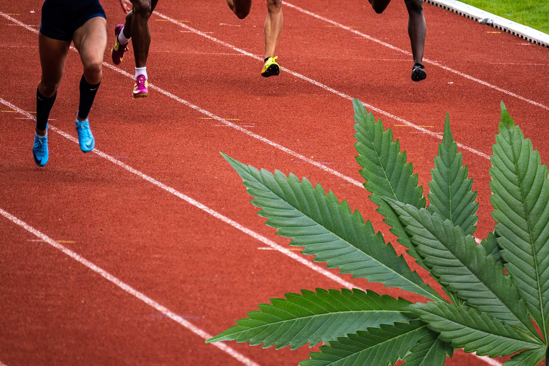 runners on a track with cannabis leaves in the foreground