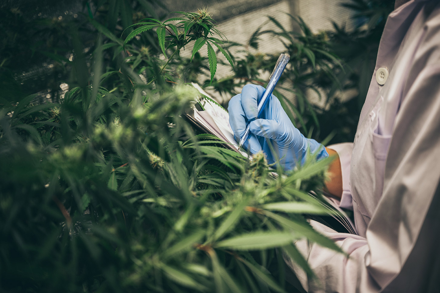 cannabis worker with blue gloved hand taking notes with pen and paper in front of cannabis plant