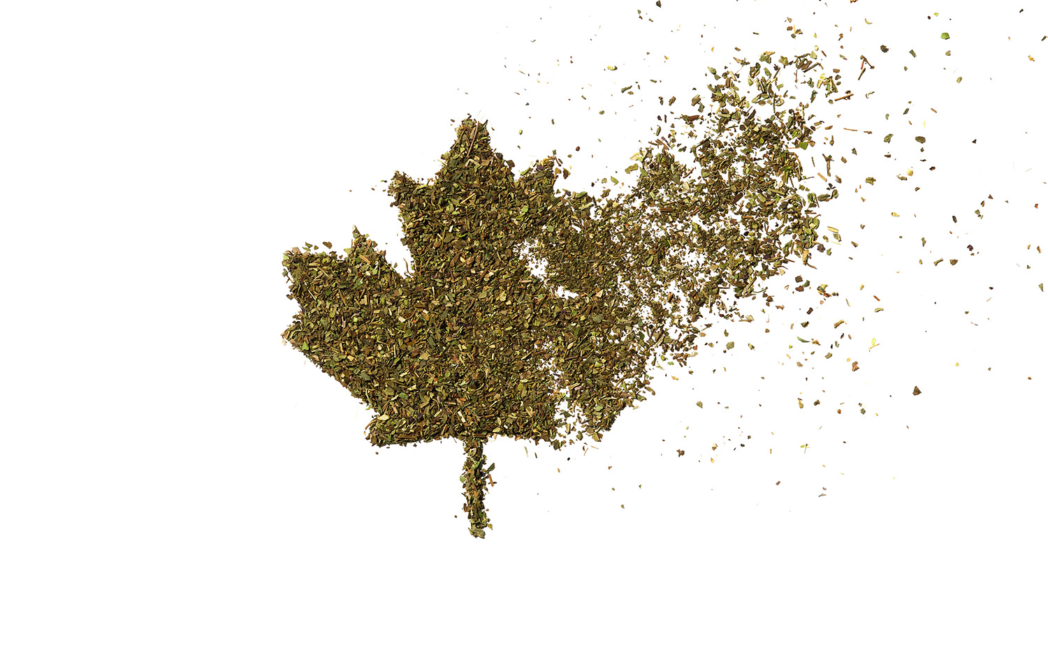 Cannabis debris in the shape of the Canadian maple leaf