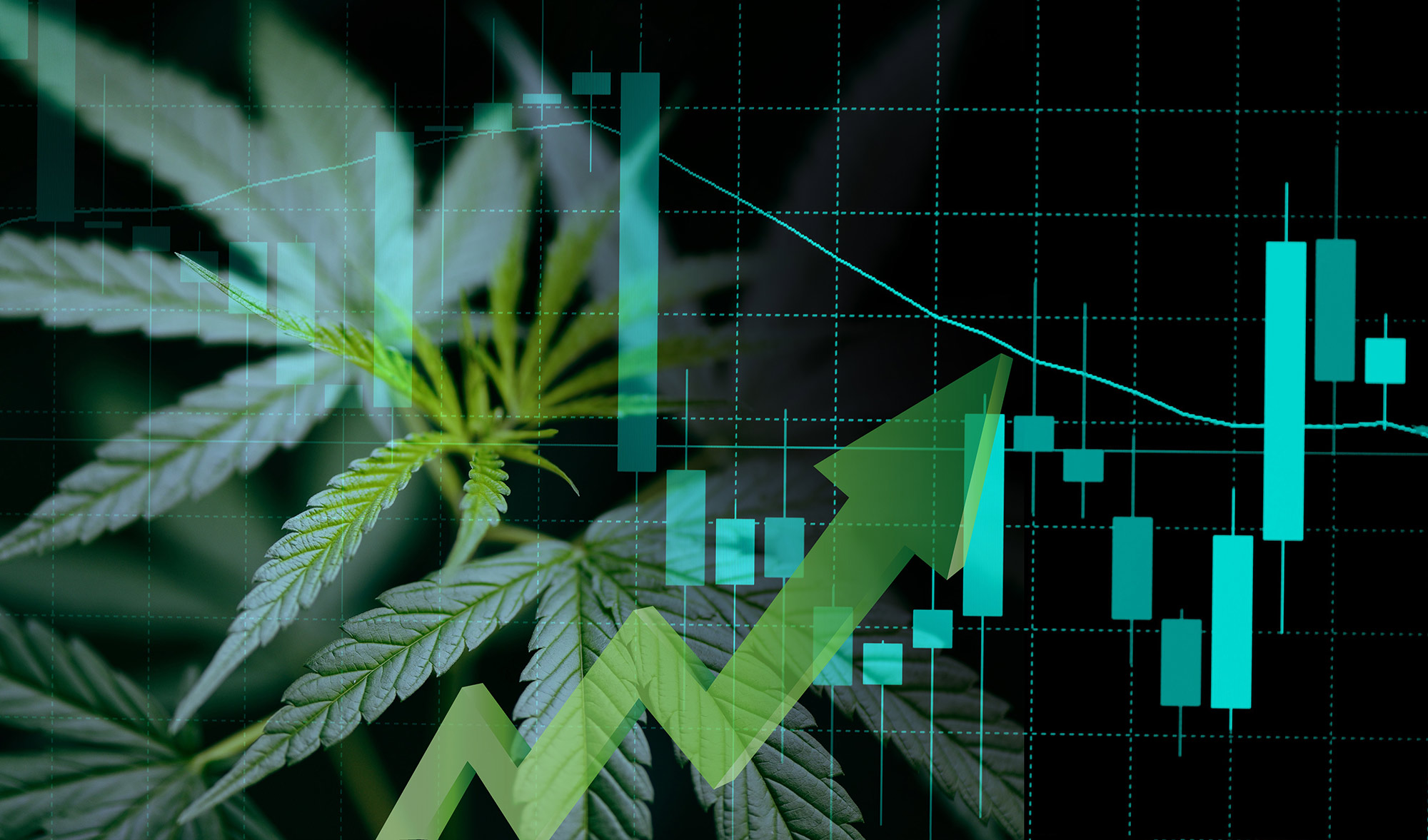 Cannabis business with marijuana leaves and stock graph charts on market